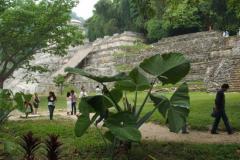 Mayan Ruins at Palenque, Tabasco, Mexico